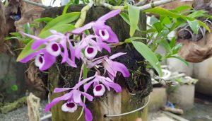 Hình ảnh hoa lan màu tím