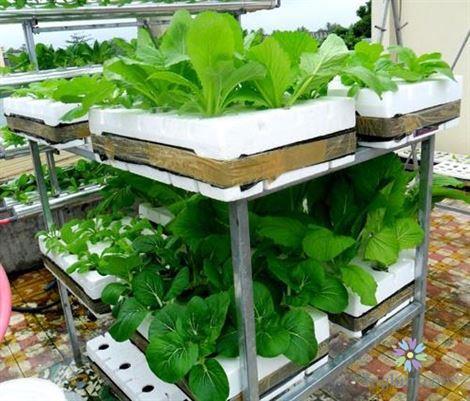 Giá trồng rau