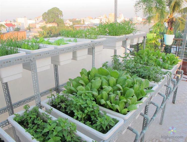 Vườn rau xanh tốt