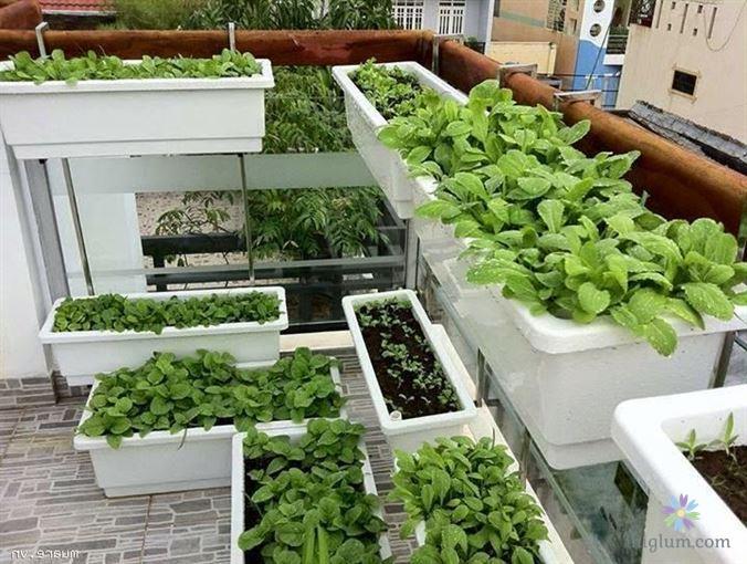 Cách trồng rau tại nhà không hề phức tạp