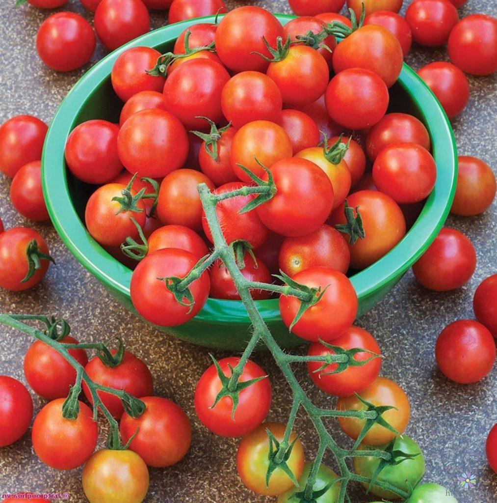 Hướng dẫn chăm sóc cà chua tại nhà