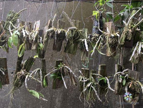 Chọn giá thể trồng lan