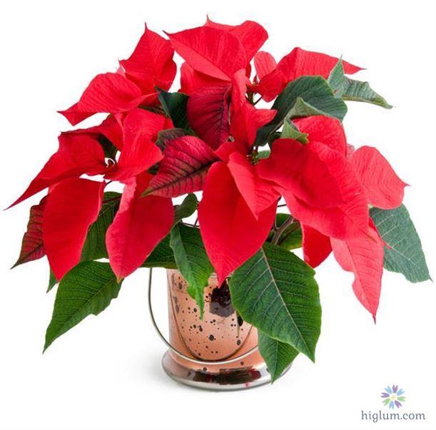 Hướng dẫn trồng cây hoa trạng nguyên - higlumcom