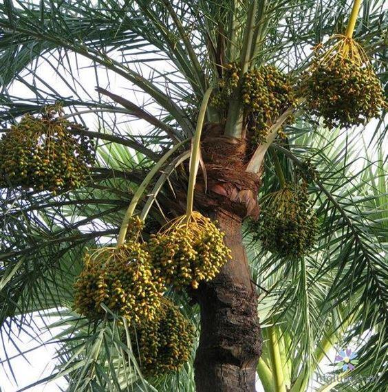 Loài cây có nhiều tác dụng to lớn đối với cuộc sống của chúng ta
