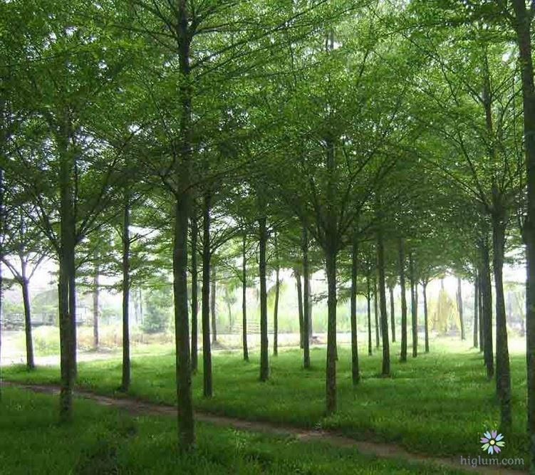 Lợi ích của trồng cây xanh bóng mát