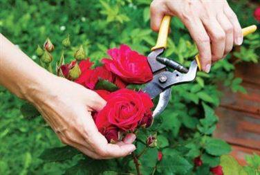 Cắt tỉa hoa