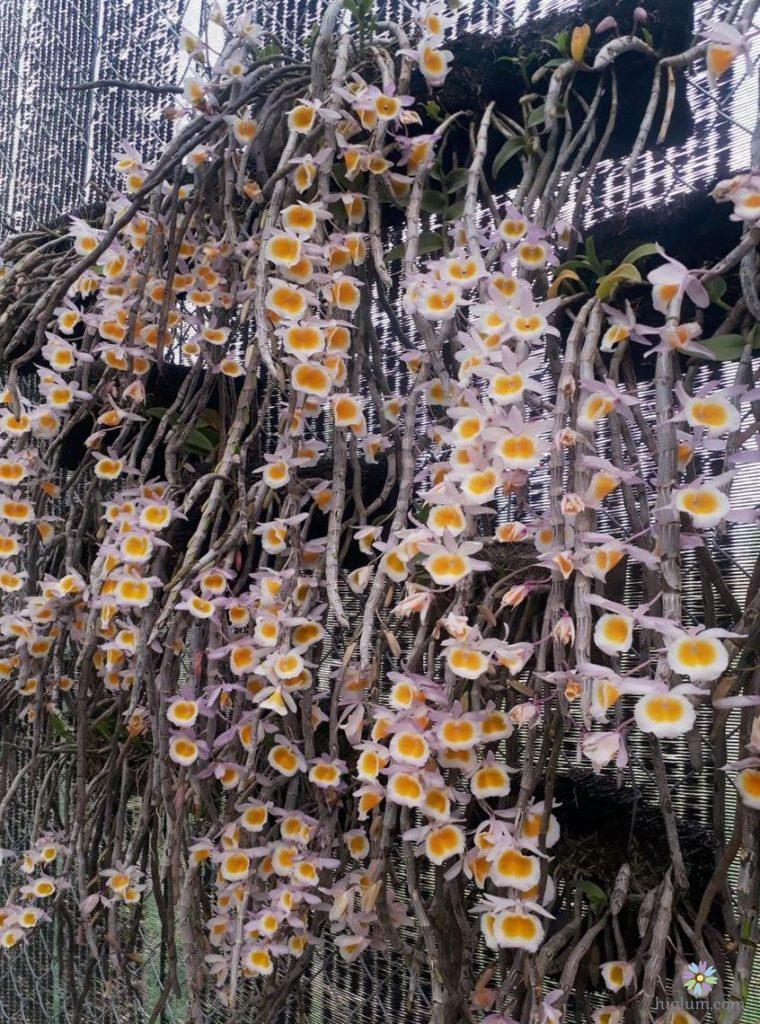 Phương pháp trồng long tu