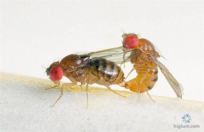 13 cách diệt ruồi hiệu quả - hết sạch sau 4 ngày