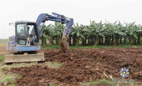 Cải tạo đất trồng