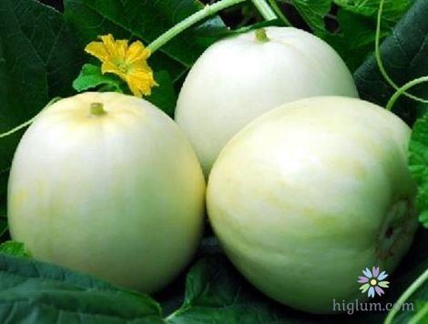 Kỹ thuật trồng dưa lê