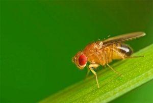 Cách đuổi ruồi hiệu quả