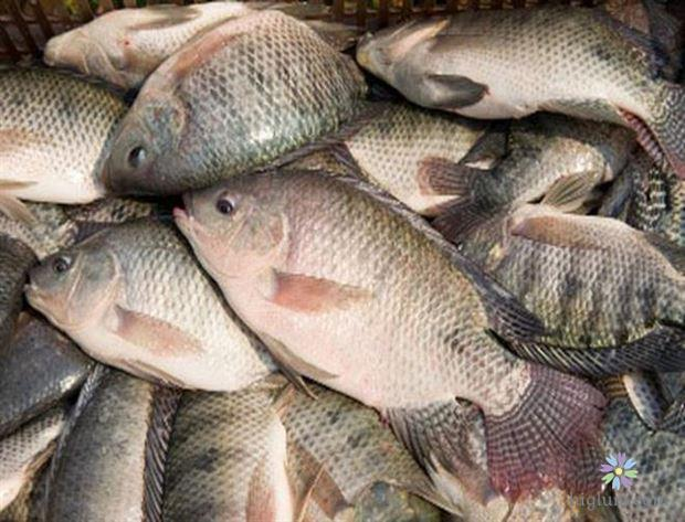 Các loại cá nước ngọt