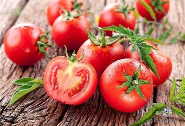 Chuẩn bị cà chua