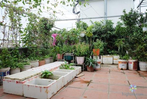 Sân thượng là vị trí lý tưởng để trồng chanh
