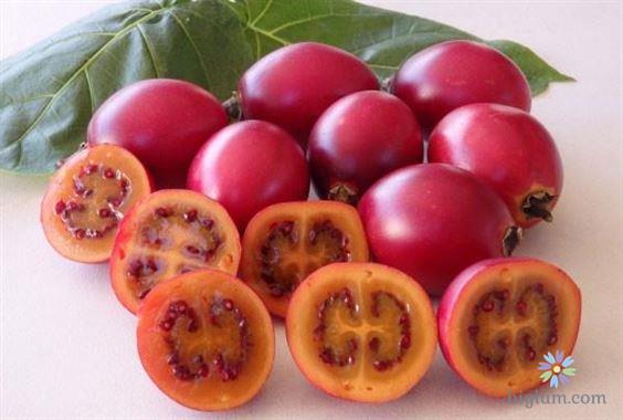 Cây cà chua thân gỗ có đặc điểm như thế nào?