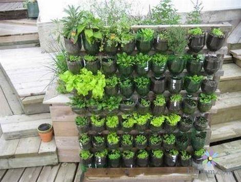 Hướng dẫn trồng rau tại nhà bằng chai nhựa