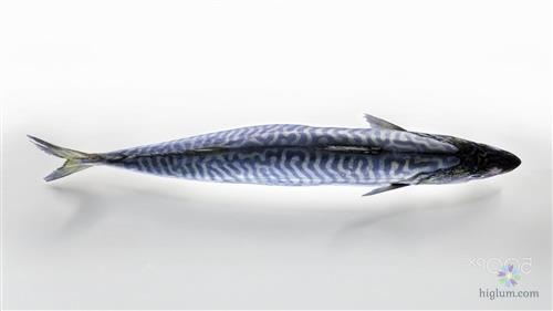 Giá trị dinh dưỡng của cá thu