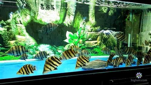 Chọn bể nuôi cá hổ