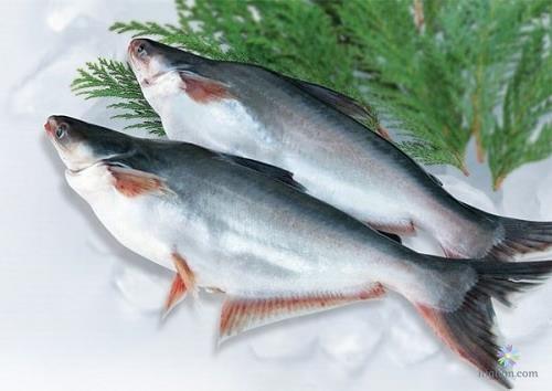 Đặc điểm của cá hú là gì?
