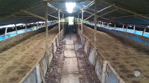 Xây dựng chuồng nuôi đúng kỹ thuật giúp đảm bảo cho việc nuôi giun quế hiệu quả