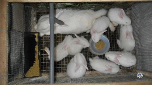Chăm sóc thỏ con