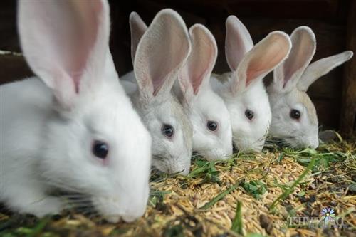 Thỏ ăn gì? Chuẩn bị thức ăn cho thỏ