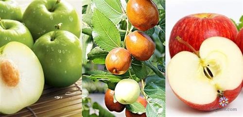 Hướng dẫn trồng táo từ hạt
