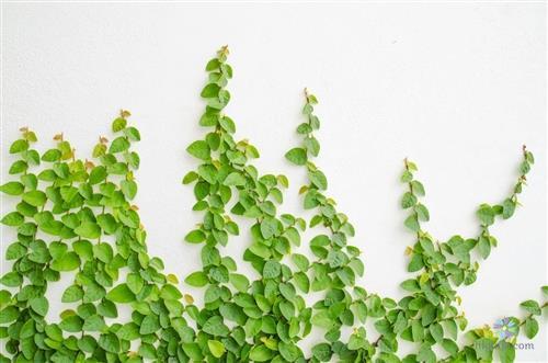Hình ảnh cây thằn lằn đang phát triển xanh tốt