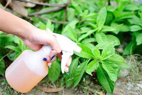 Sử dụng phân bón lá cho cây trồng