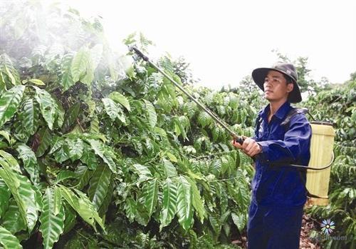 Phân bón lá ngày càng quan trọng trong quá trình phát triển của cây trồng