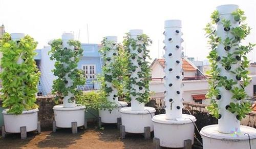Hệ thống trồng rau khí canh được nhiều gia đình triển khai
