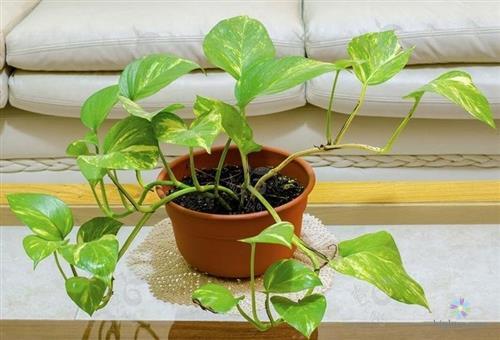Có thể bắt đầu trồng từ những nhánh bé